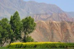 Het gebied van het raapzaad in de bergen van Qinhai, China Stock Foto's