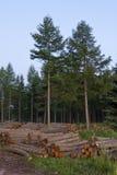Het gebied van het registreren, bij de rand van het bos royalty-vrije stock afbeeldingen