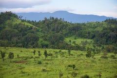 Het gebied van het savannegras met berg Royalty-vrije Stock Foto