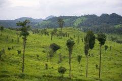 Het gebied van het savannegras met berg Stock Afbeeldingen