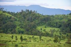 Het gebied van het savannegras met berg Royalty-vrije Stock Foto's