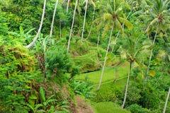 Het gebied van het Terras van de rijst, Ubud, Bali, Indonesië. stock fotografie