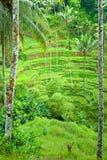 Het gebied van het Terras van de rijst, Ubud, Bali, Indonesië. stock afbeelding