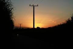 Het gebied van het zonsondergangsuikerriet Stock Foto's