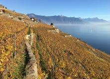 Het gebied van Lavaux, Zwitserland stock fotografie