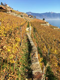Het gebied van Lavaux, Zwitserland royalty-vrije stock fotografie