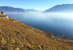 Het gebied van Lavaux, Zwitserland stock foto