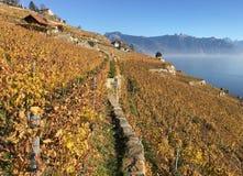 Het gebied van Lavaux, Zwitserland Royalty-vrije Stock Afbeeldingen