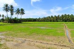 Het gebied van Padi Stock Afbeelding