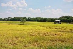 Het gebied van Padi Stock Fotografie