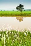 Het Gebied van Padi en het Kanaal van het Water Royalty-vrije Stock Afbeelding