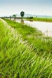 Het Gebied van Padi en het Kanaal van het Water Stock Afbeeldingen