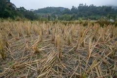 Het gebied van rijstterrassen in Mae Klang Luang, Chiang Mai, Thailand Stock Foto's