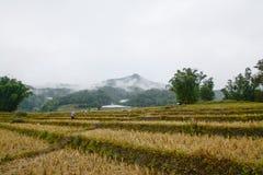 Het gebied van rijstterrassen in Mae Klang Luang, Chiang Mai, Thailand Stock Afbeelding