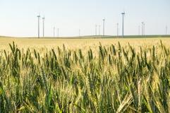 Het gebied van tarwekorrels met windturbines Royalty-vrije Stock Afbeeldingen
