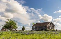 Het gebied van Texas bluebonnet en oude schuur in Ennis Royalty-vrije Stock Afbeelding