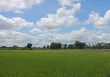 Het gebied van Thailand met blauwe en groene bomen Stock Afbeelding