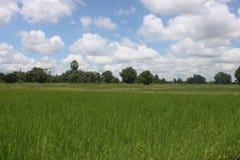 Het gebied van Thailand met blauwe en groene bomen Stock Foto
