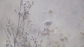 Het gebied van wilde bloemen sluit omhoog bij dageraad stock footage