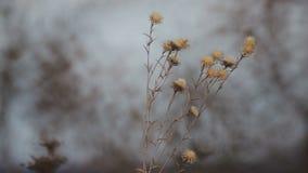 Het gebied van wilde bloemen sluit omhoog bij dageraad stock video