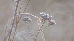 Het gebied van wilde bloemen sluit omhoog bij dageraad stock videobeelden