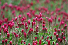 Het gebied van Wildflower Royalty-vrije Stock Afbeelding