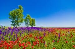 Het gebied van Wildflowers Stock Foto's
