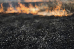 In het gebieds brandende gras dat, worden de struiken en de installaties gebrand, land met de donkere, vroege lente wordt behande Royalty-vrije Stock Afbeelding