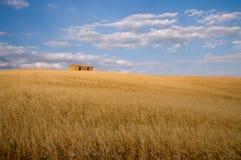 Het gebieds gouden rijp van de haver voor oogst Stock Afbeeldingen