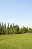 Het gebiedsachtergrond van het gras Stock Afbeelding