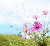 Het gebiedsbloemen van de zomer Stock Fotografie