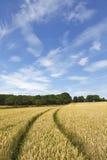 Het gebiedslandschap van de tarwe Stock Afbeelding