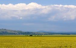 Het gebiedslandschap van de tarwe Stock Afbeeldingen