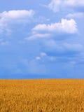 Het gebiedsverticaal van de tarwe Stock Fotografie