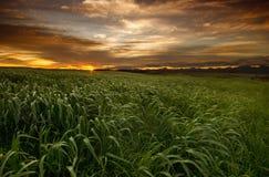 Het gebiedszonsondergang van het gras stock afbeeldingen