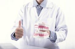 Het gebit van de borsteltanden van tandartsshowing cleaning of tandkaakmodel, tandheelkundeinstrumenten in tandarts` s bureau stock foto's