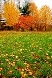 Het gebladerte en het gazon van de herfst. Stock Afbeeldingen