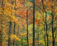 Het Gebladerte van de daling, Tennessee stock foto