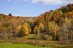 Het Gebladerte van de Daling van Vermont Stock Foto's