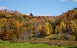 Het Gebladerte van de Daling van Vermont Stock Afbeeldingen