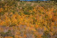 Het Gebladerte van de Daling van Vermont Royalty-vrije Stock Fotografie