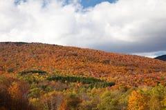 Het Gebladerte van de Daling van Vermont Royalty-vrije Stock Foto's