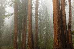 Het Gebladerte van de daling in Yosemite Stock Afbeeldingen