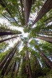 Het Gebladerte van de daling in Yosemite Royalty-vrije Stock Fotografie
