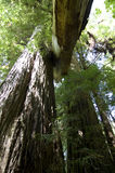 Het Gebladerte van de daling in Yosemite Stock Foto