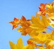 Het gebladerte van de herfst Royalty-vrije Stock Foto's
