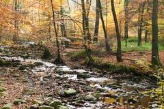 Het gebladerte van de herfst Stock Foto