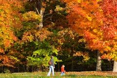 Het gebladerte van de herfst royalty-vrije stock afbeelding