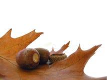 Het gebladerte van de herfst Stock Foto's