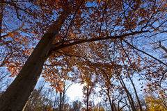 Het gebladerte van de herfst het bos Royalty-vrije Stock Foto